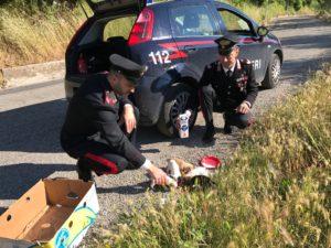 Carabinieri salvano cuccioli montoro