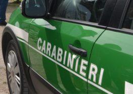 I carabinieri Forestali sequestrati 18.000 shoppers in plastica – Multe per 80.000 euro.