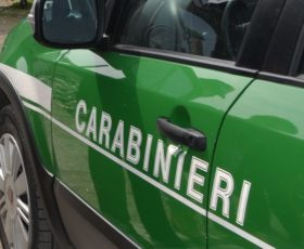 I carabinieri Forestali sequestrati 18.000 shoppers in plastica – Multe per 80.000 euro.