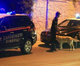 Montoro, coppia coltivava marjuana in casa, i carabinieri trovano anche munizioni, denunciati