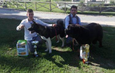 """Il Team """"Irpinia Montorese"""" del giovane hundler Giuseppe Maietta conquista l'Expo Nazionale di Pomigliano D'Arco (NA)"""