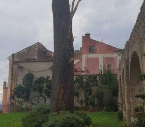 Ravello – Fulmine colpisce un pino al Belvedere Principessa di Piemonte. Stradainternainterrotta per verifiche