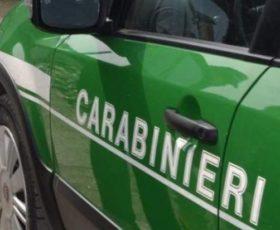 Cervinara – Area boschiva trasformata in castagneto, scattano due denunce