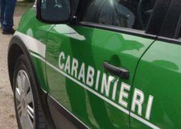 Irpinia. Controlli dei Carabinieri forestali ad officine e autolavaggi