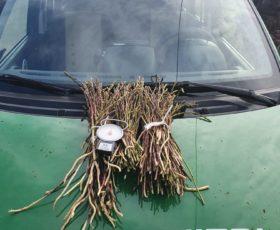 Carabinieri Forestali sequestrano 87 kg di asparago selvatico, 42 sanzioni per 16.000 euro