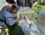 Carabinieri sequestrano un macaco giapponese tenuto in gabbia