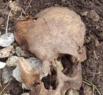 Va a cercare funghi e trova un teschio umano, indagini in corso