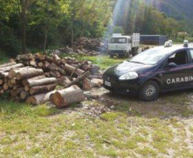 Rubano legna, due fratelli nei guai
