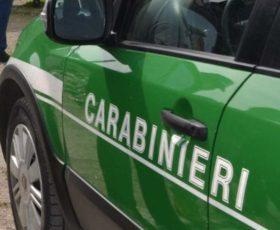 Contrada – combustione di residui vegetali: i carabinieri forestali denunciano 55 enne per incendio