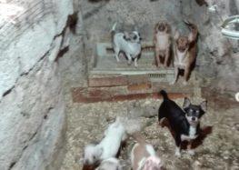 Nocera Inferiore. Cani maltrattati: tratti in salvo i cuccioli e denunciato l'autore