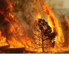 Incendi boschivi – Denunciato un incendiario.