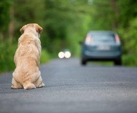 Abbandona il cane, scatta la denuncia per un 56enne di Cava